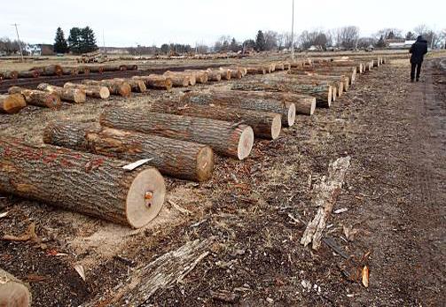 材木屋の真実 - 良質材の意味:樹齢