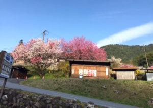 木曽谷と北海道の4月末