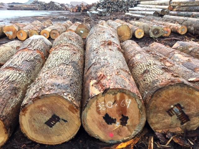 アメリカから今シーズンの原木到着